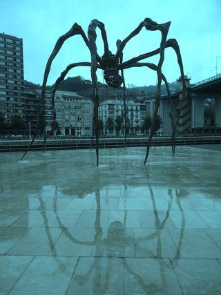 Spider bio 10b